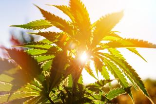 Marijuanasunset